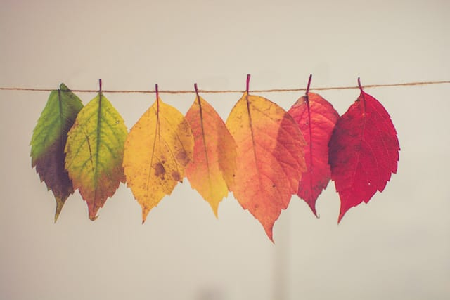 Fall Library Finds for Preschoolers