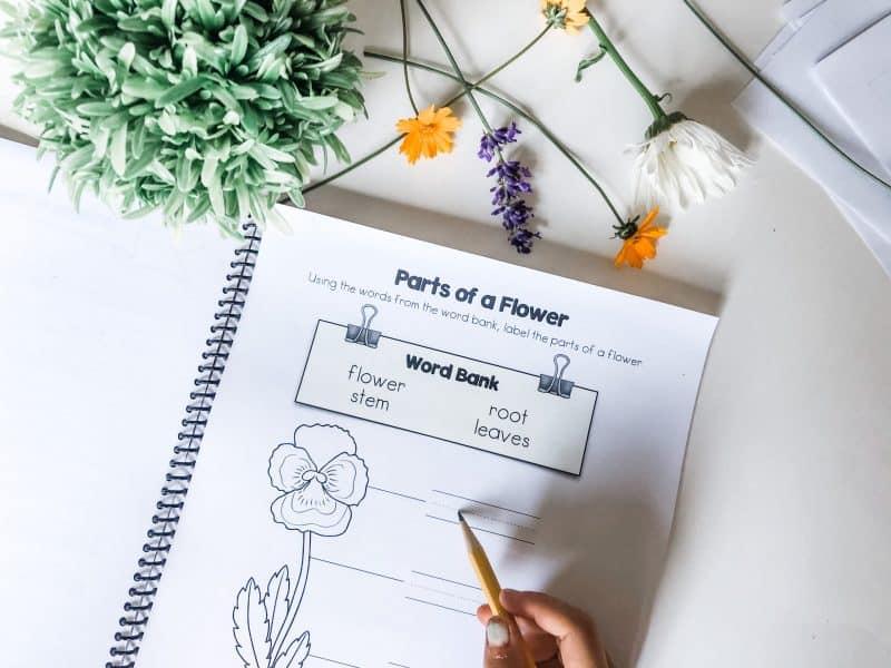homeschool garden journal activity page