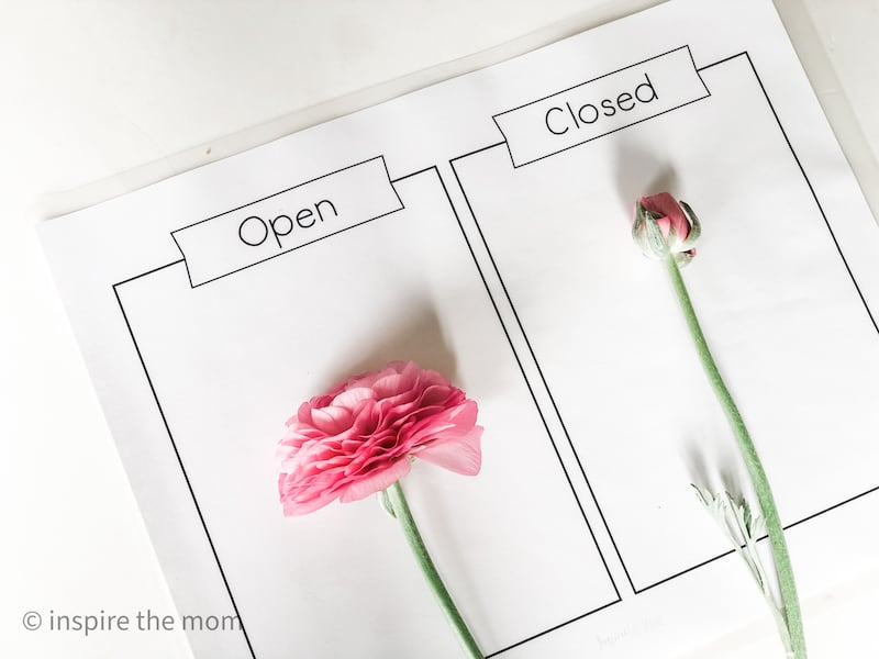 printable nature sorting mats open and closed
