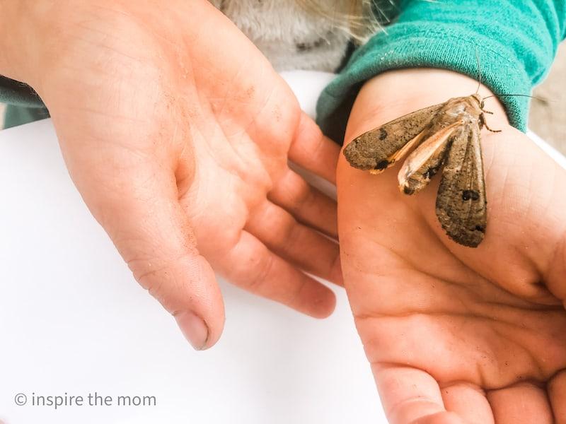teach God through nature bug on hand