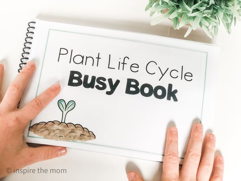 printable plant life cycle busy book cover