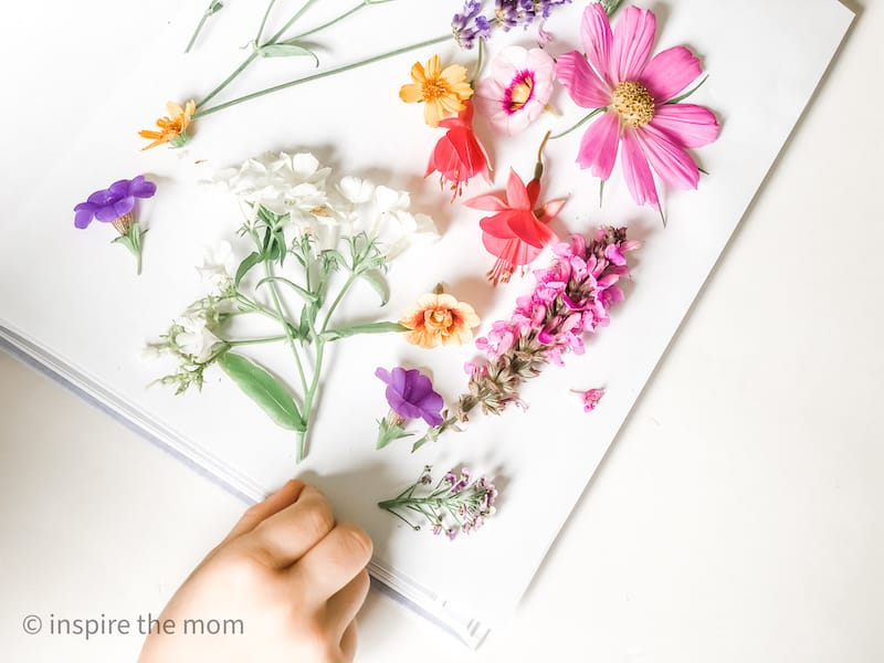 how to press flowers in a book different types of flowers